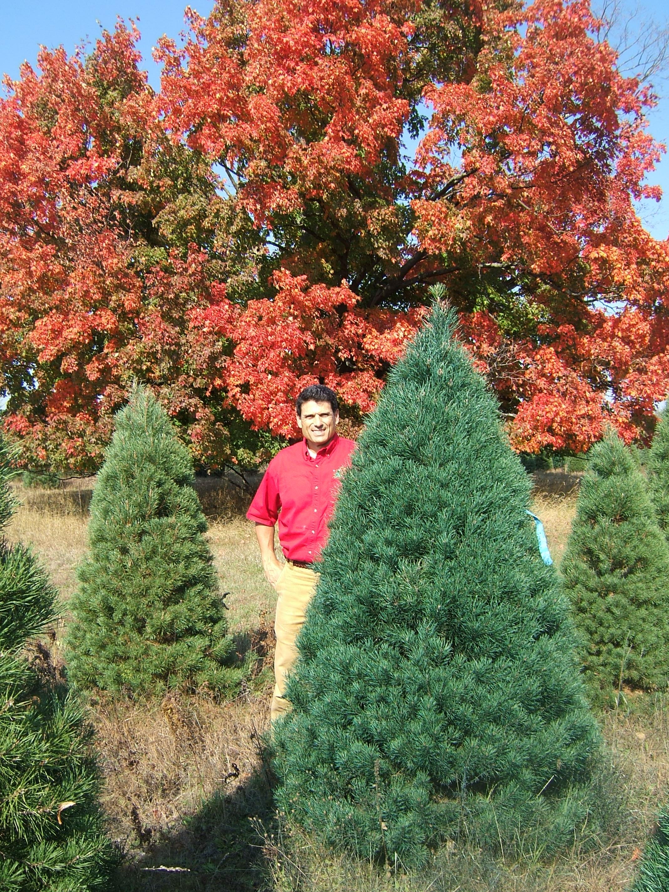Big John's Christmas Trees - Trees