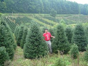 Big John 39 S Christmas Trees