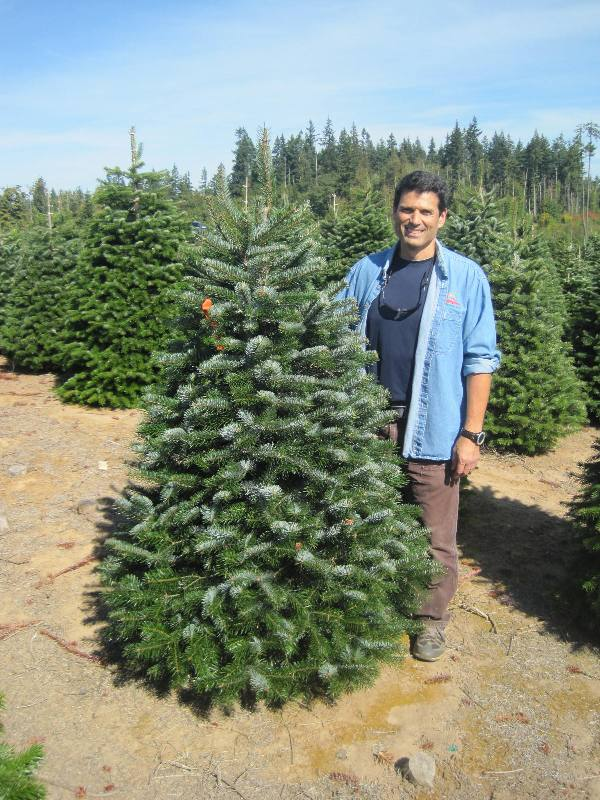 Big John S Christmas Trees Trees